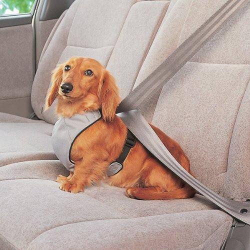 犬用カー用品のおすすめ5選【ドライブグッズで快適に】