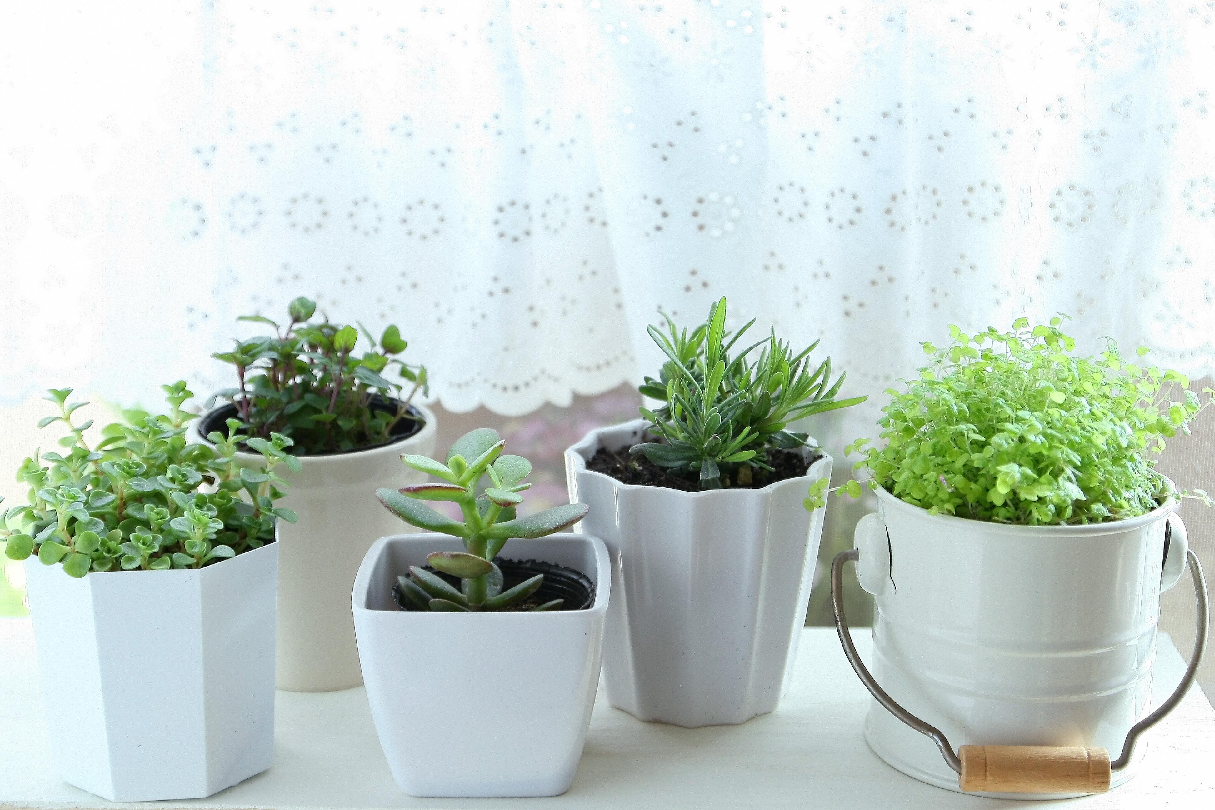 フェイクグリーンのおすすめ4選!お手入れなしの観葉植物