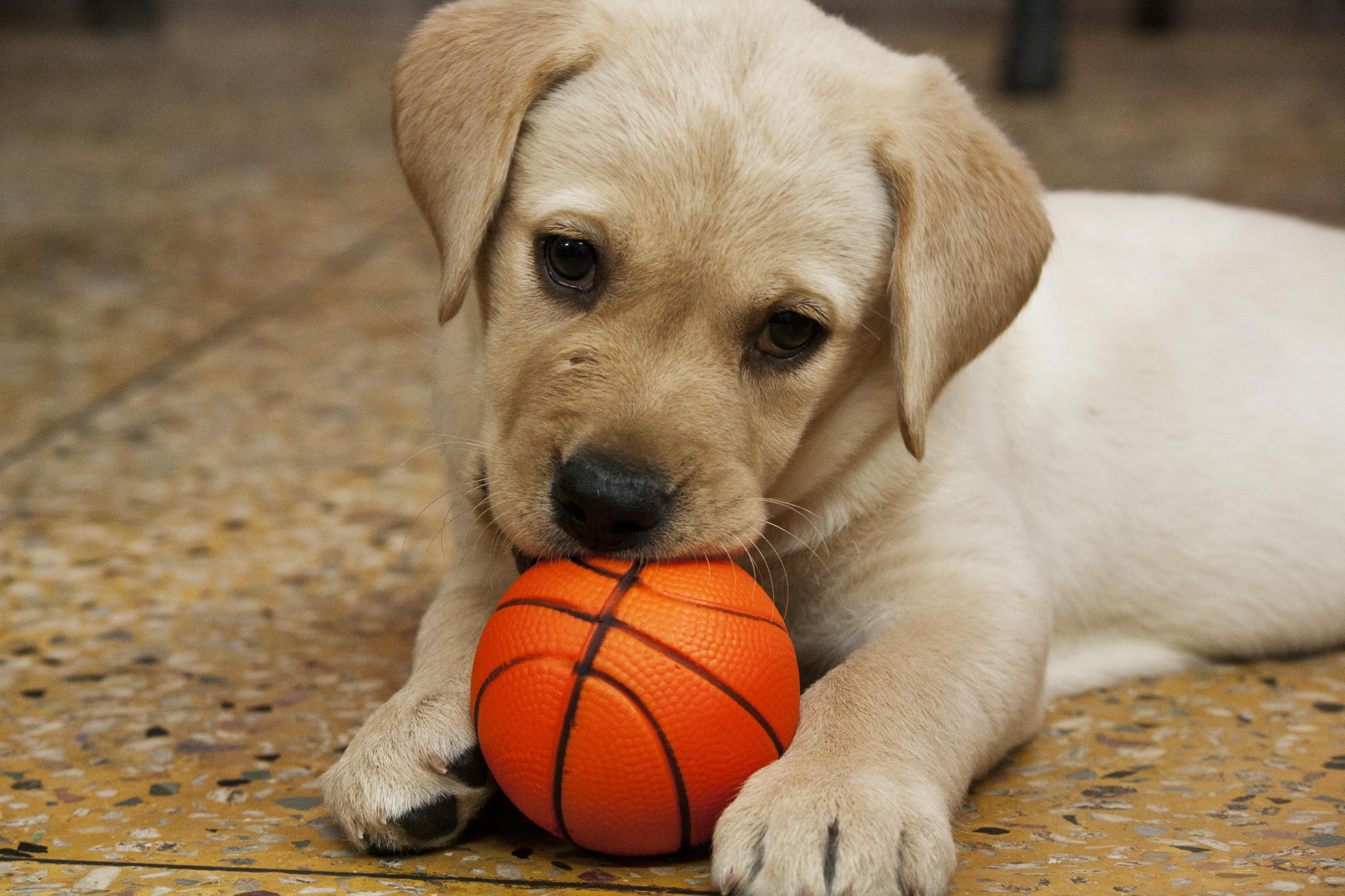 犬用おもちゃのおすすめ6選!ボールやぬいぐるみも