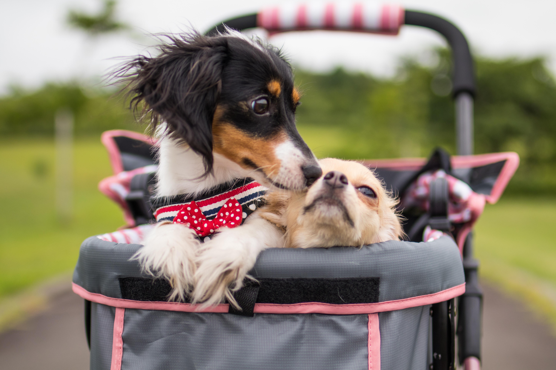 犬用カート・ペットバギーのおすすめ5選&選び方【2019年版】