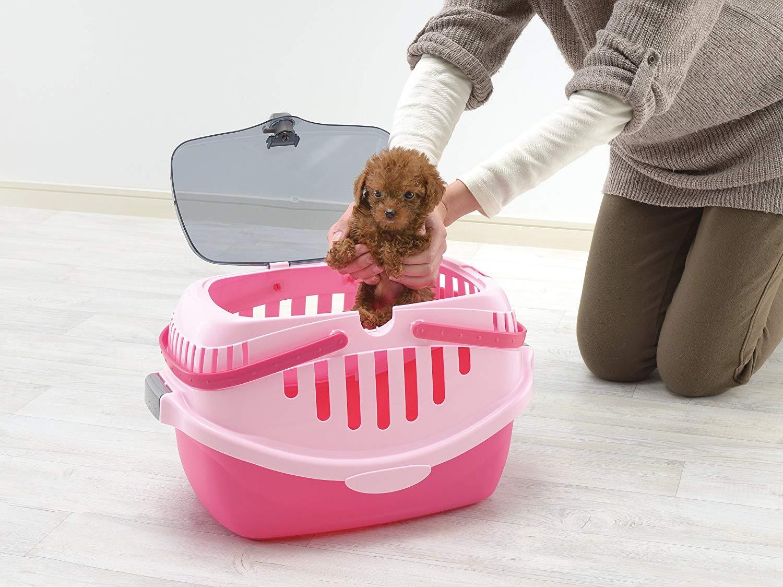 犬用キャリーの選び方&おすすめ7選【犬とのおでかけの必需品!】