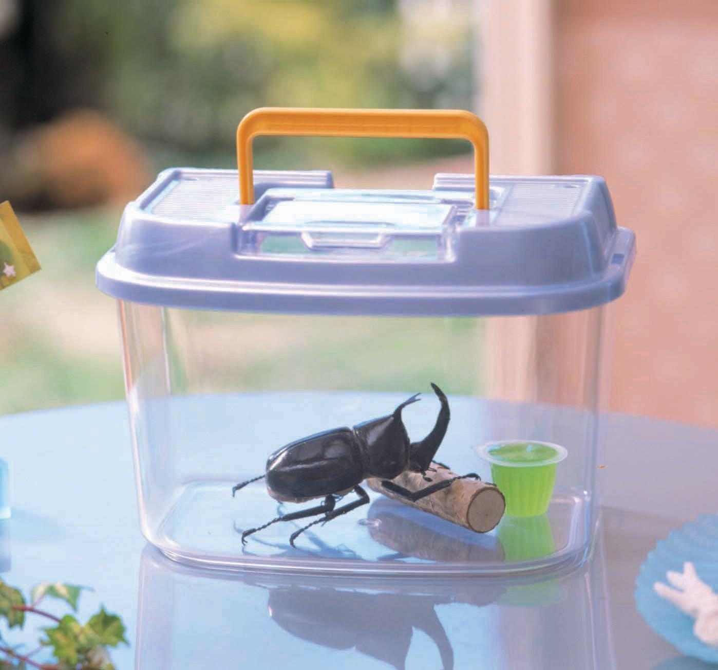 昆虫飼育ケースのおすすめ4選&選び方【観察が楽しくなる】