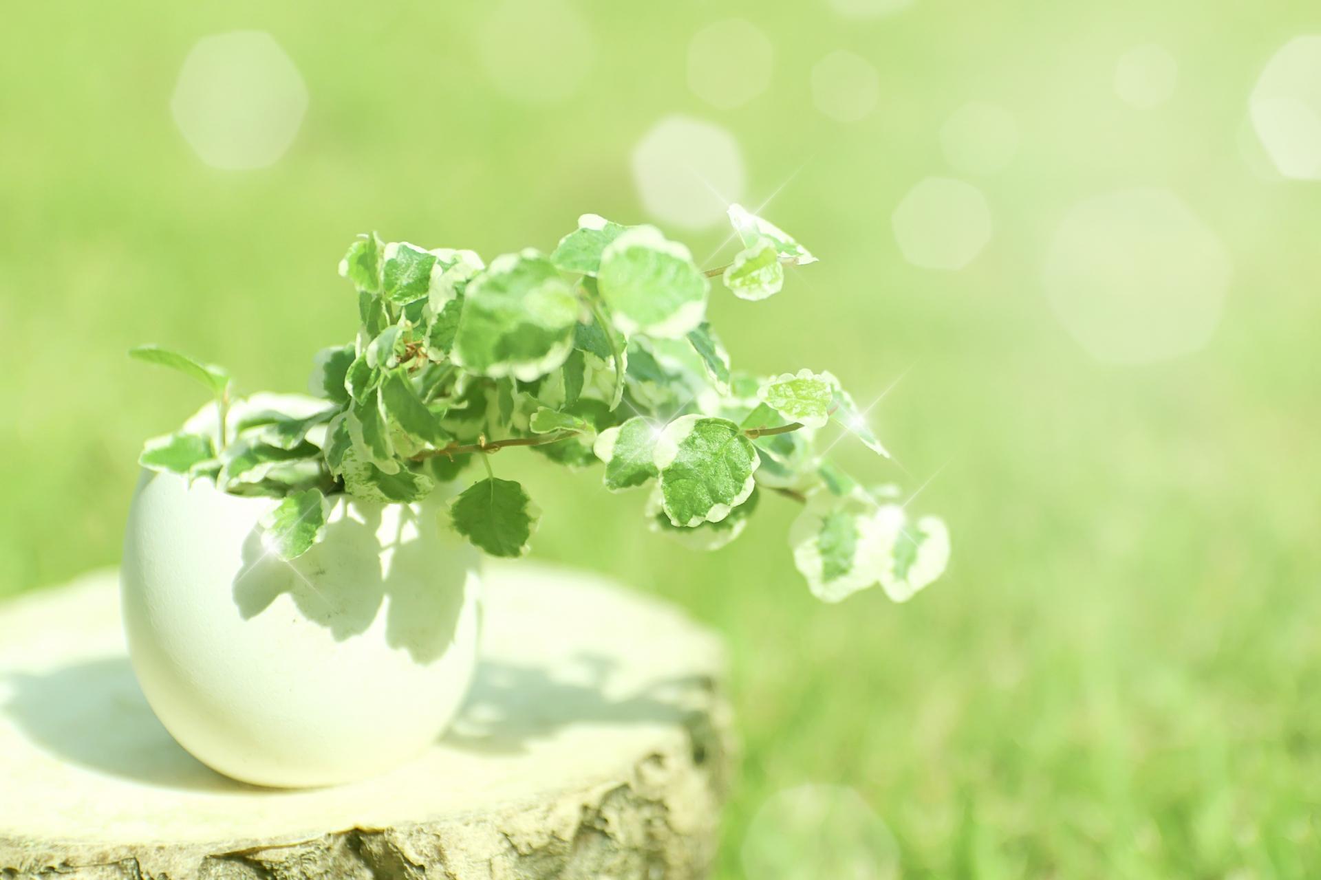 観葉植物のおすすめ5選【おしゃれインテリア用に】
