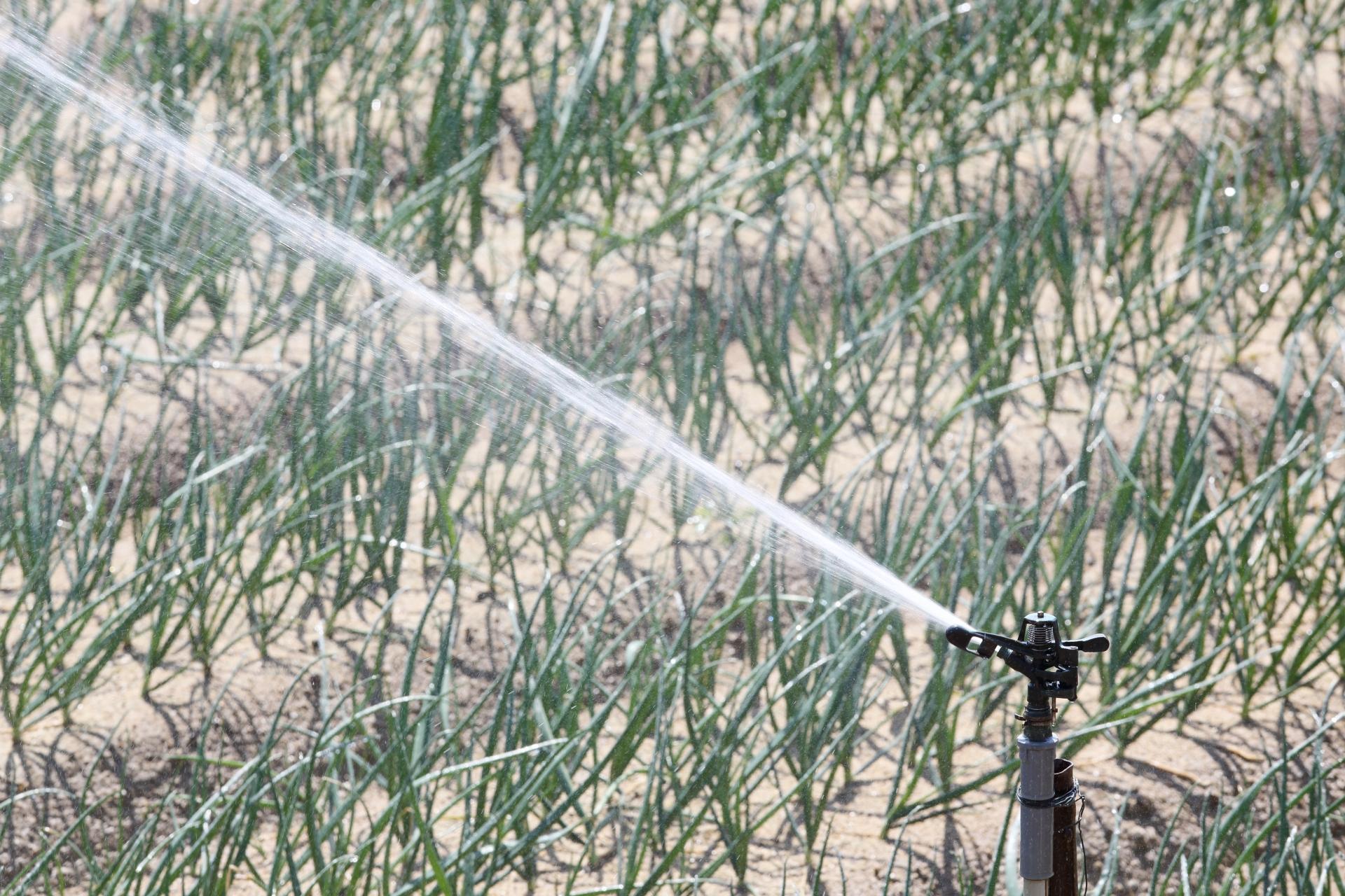 スプリンクラーのおすすめ5選&選び方【庭の芝生に自動散水】