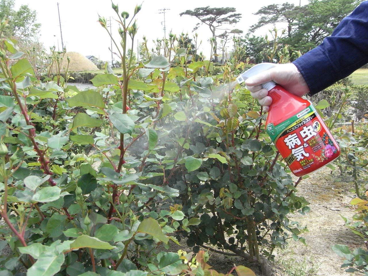 殺虫剤のおすすめ5選&選び方【ゴキブリ対策に】