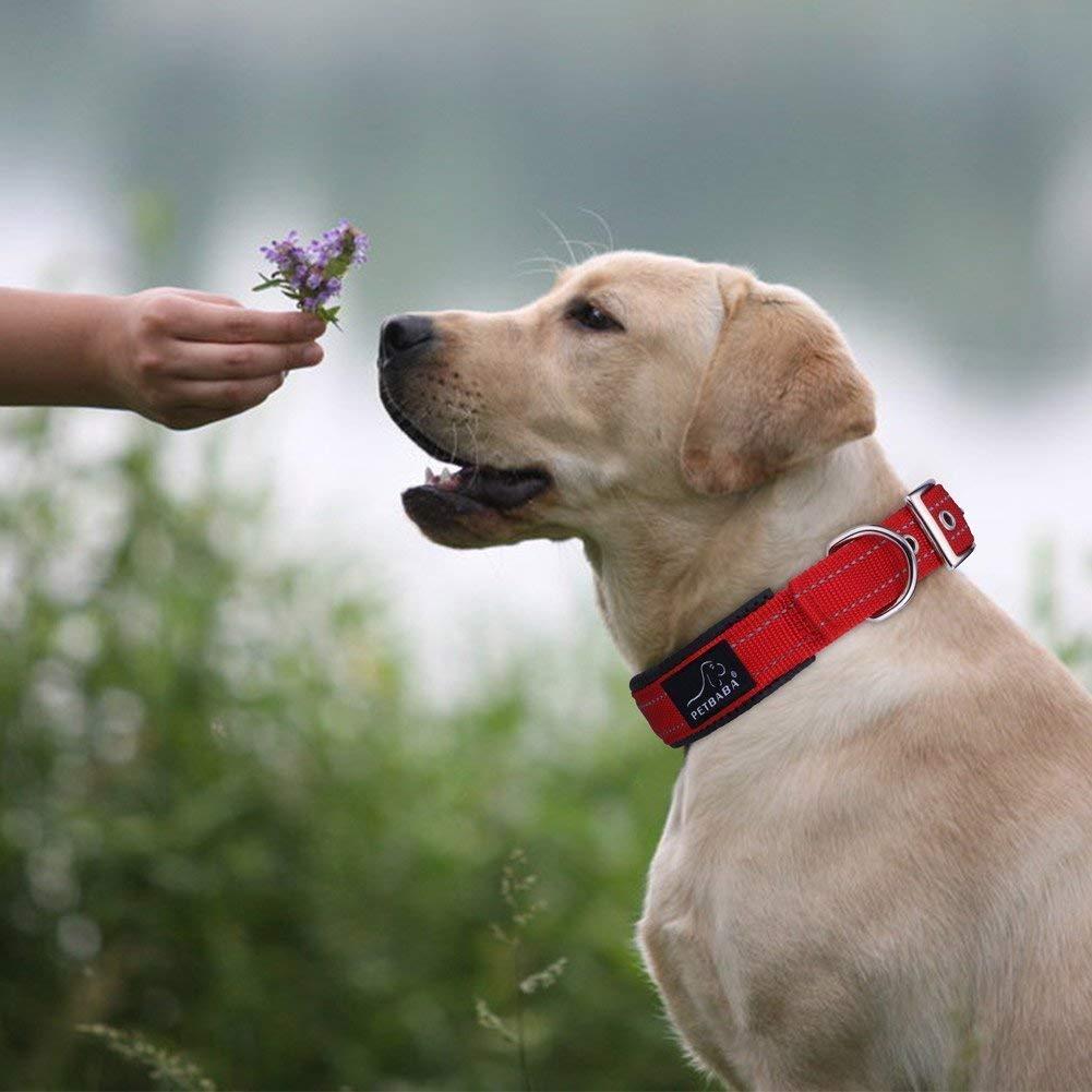 犬用首輪のおすすめ14選!おしゃれでかわいいものを紹介