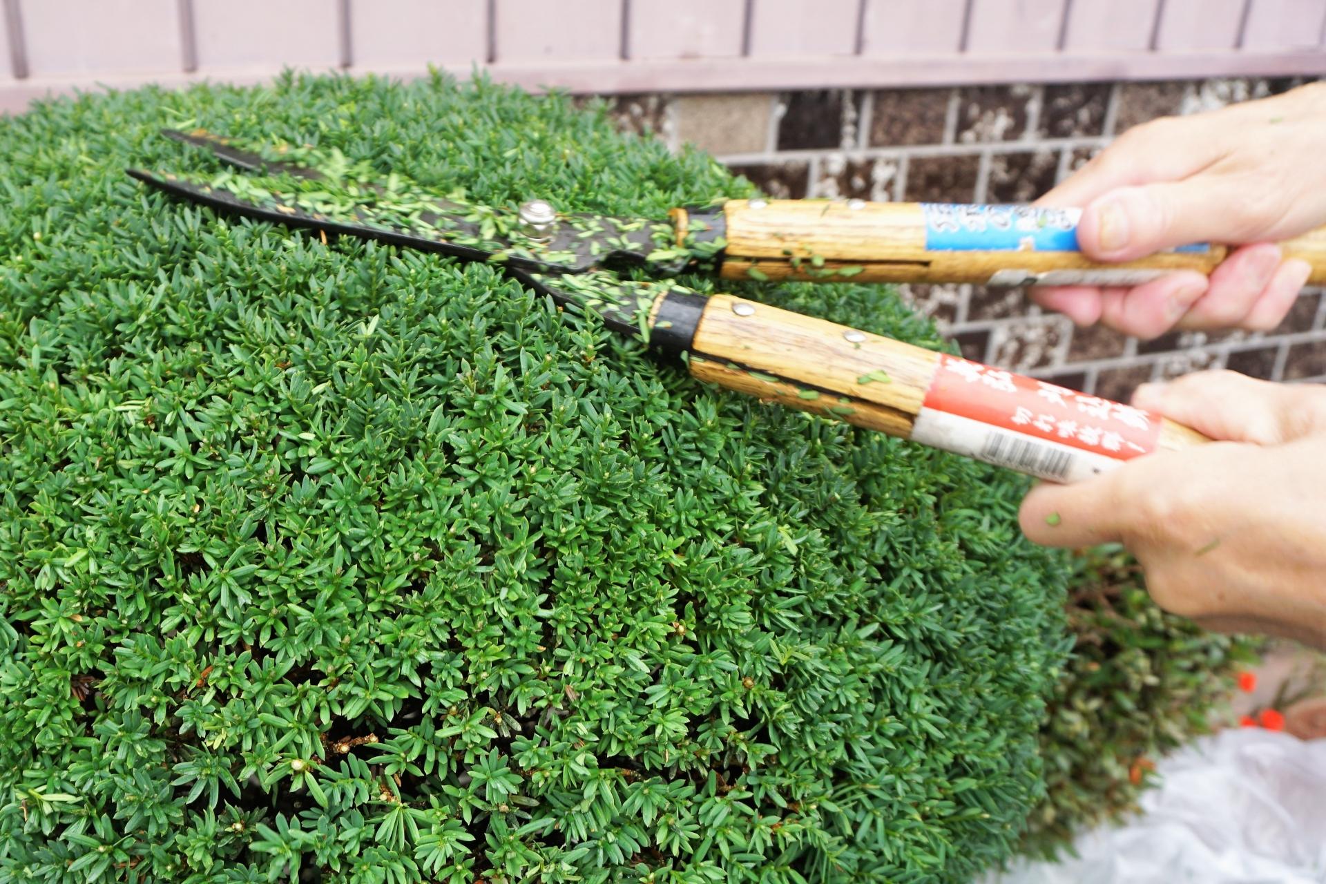 刈込鋏のおすすめ10選!庭や植木の手入れに