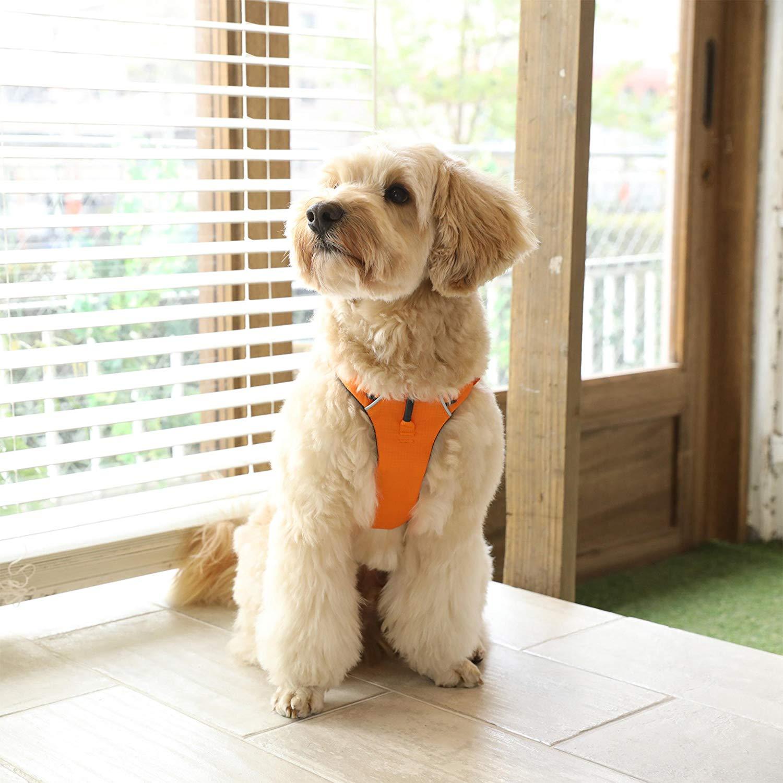 犬用ハーネスのおすすめ8選!通気性の良いメッシュ素材も