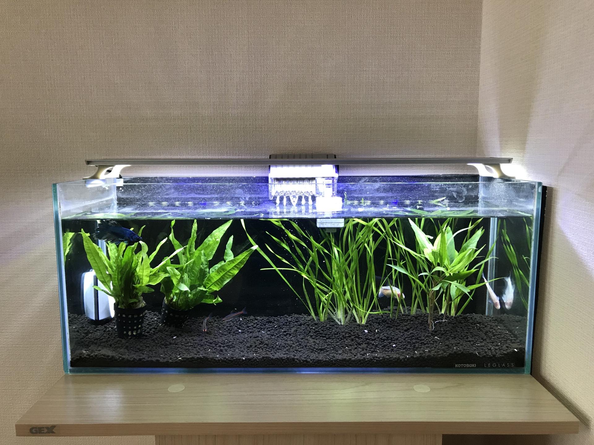 水槽用ライトのおすすめ7選!LEDやメタハラも