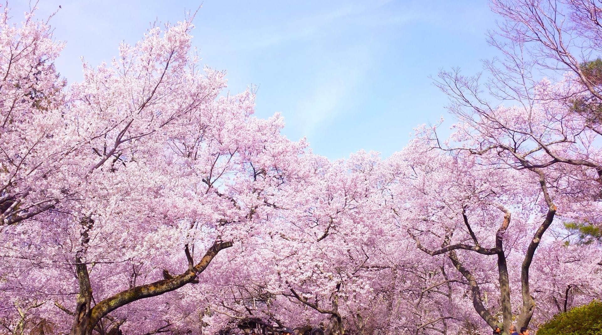 お花見向けの便利グッズおすすめ31選【2020年版】