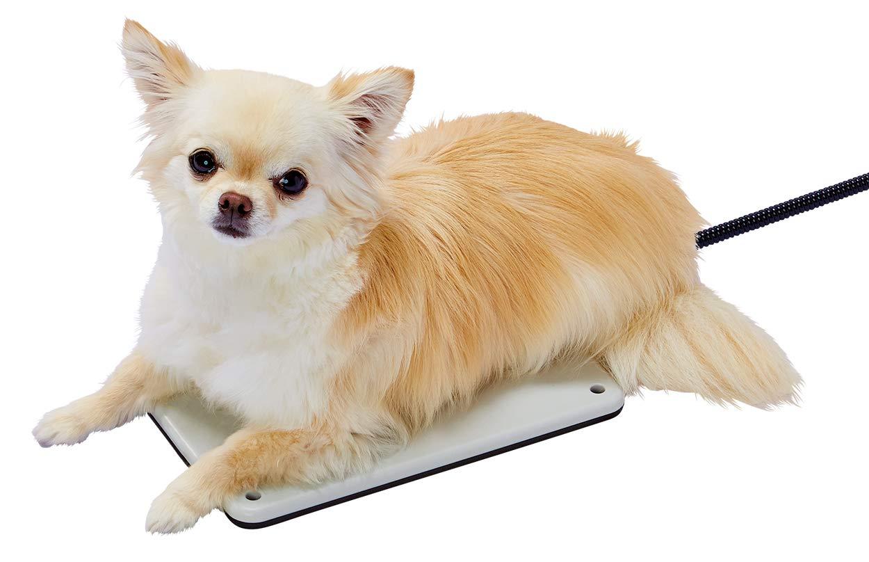 犬用ホットカーペットのおすすめ11選!温度設定が可能なタイプも