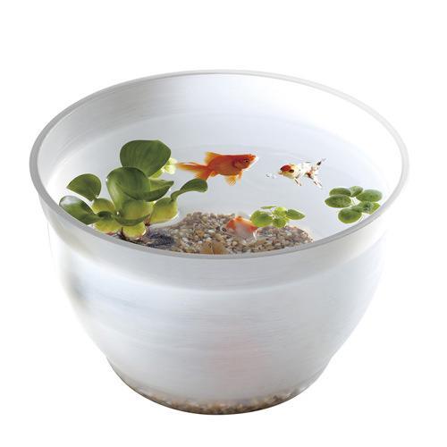 金魚鉢のおすすめ11選!ガラス製やプラスチック製も