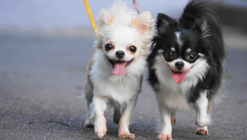 夏のお散歩に肉球ケアを習慣化【犬用オーガニックローション】でプニプニ肉球